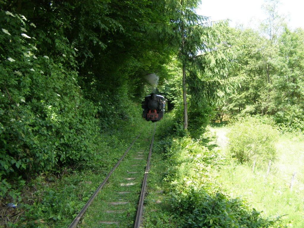Steam train on Vaser Valley